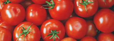 picture shows perfect tomatoes